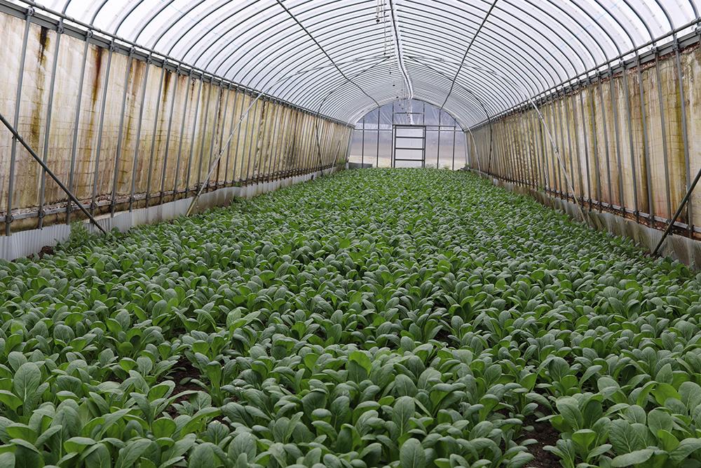 葉っぴ~Farm